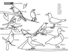 Bird Coloring Page Common Birds, Bird Coloring Pages, Science Worksheets, Have Fun, Preschool, Activities, Learning, Plants, Animals