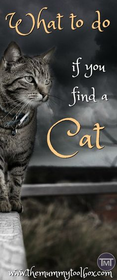 What do you do if you find a cat? how do you know if it has an owner, what if it is injured and who do you call? All the answers and more!