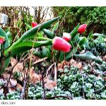 A few of my casualties #spring #frost  on Twitpic