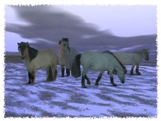 Dawn Horse « Cold Lands Artist. Yakutian....a cold hardy horse brought to the Siberian Pleistocene Park by Sergey Zimov. Also has European Bison,Musk Ox.