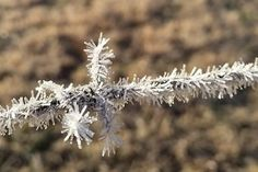 Brisbane has recorded its coldest morning in 103 years, with low temperatures also being felt across the rest of Queensland. Barbed wire covered in ice.