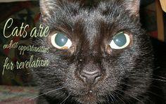 OccupyForLife: Maya, pisica mea neagra/ Maya , my black cat My Black, Panther, Maya, Animals, Animales, Animaux, Animal Memes, Animal, Maya Civilization