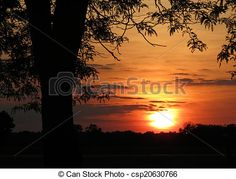 A tree is silhouetted against the setting of the sun.