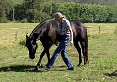 horse dance *Do a Little Dancin'. Teach your horse some simple steps, crank up the music and dance! I'm currently teaching Bella to do the Hokey Pokey (aka Horsey Pokey). Watch this video to see her first steps: BELLA LEARNING THE HOKEY POKEY