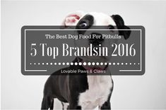 The Best Dog Food For Pitbulls: 5 Top Brandsin 2016