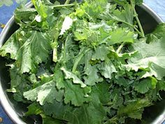 Raw Broccoli Rabe a delicious Italian Green for salads.
