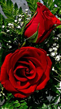Red roses for you . Beautiful Rose Flowers, Beautiful Gif, Love Rose, Amazing Flowers, My Flower, Beautiful Flowers, Gif Rose, Flowers Gif, Rose Images