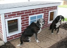 Buddy and Sparky - Indiana:  several years of being tried and tested, this dog house has been proven to be the most comfortable and the safest home you can build for your beloved dogs.