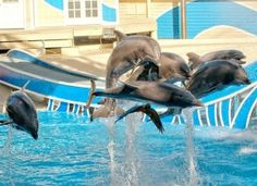 Protest Marine Mammal Abuse for Entertainment