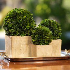 Colmar Boxwood Topiary