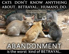 Cats know nothing about betrayal, humans DO!