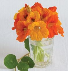 Flower Nasturtium Trailing Mix D1201A (Multi Color) 25 Seeds by David's Garden Seeds David's Garden Seeds http://www.amazon.com/dp/B00E5TCH62/ref=cm_sw_r_pi_dp_e99xub0Z25SWH