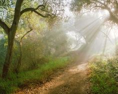 light in forest - Google Search