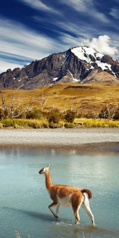 Patagonia, Argentina - brings back so many memories!!! Agh, I miss South America