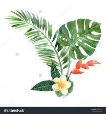 Image result for watercolor originals plants