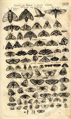 Jonston, Jan: Historiae Naturalis de Insectis Libri III. De Serpentibus et Draconibus Libri II. - Frankfurt <Main>: Merian, 1653.