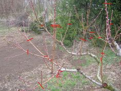 Fruit Trees, Vines, Christmas Ornaments, Holiday Decor, Plants, Outdoor, Gardening, Outdoors, Christmas Jewelry