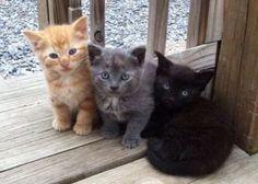 Three little kittens. Three little kittens. Cute Kittens, Cute Little Kittens, Pretty Cats, Beautiful Cats, Animals Beautiful, I Love Cats, Crazy Cats, Cute Baby Animals, Animals And Pets