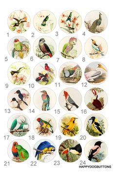 Birds Hummingbird Parrot Finch Pinback Button Flatback Badge or Magnet 1 inch set of 10 by HappyDogButtons on Etsy