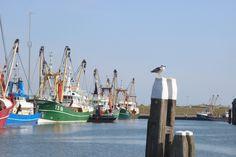 Haven Oudeschild. Harbour Texel kotters