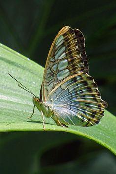 Butterfly - by Wayne Hardesty