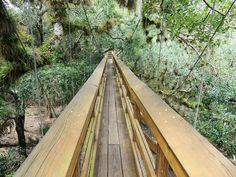canopy walkway suspension bridge Myakka river state park. Do you think this looks scary or fun?