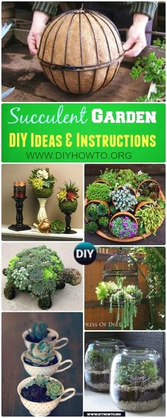 Landscaping ans Interior Design with Succulent Garden Planter Designs and Displa…   http://www.housedesigns.top/2017/08/06/landscaping-ans-interior-design-with-succulent-garden-planter-designs-and-displa/