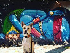 Cido e a Cidade: um cachorro vira-lata adotado super simpático e muita arte de rua no Instagram!