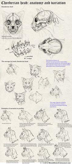 Cheederian head anatomy by BlackMysticA.deviantart.com on @deviantART