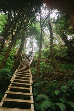 I want to hike the West Coast Trail, one of the 10 most challenging hiking trails in the world, is the best hiking trail for adventure hiking on Vancouver Island and the island's Pacific Rim…