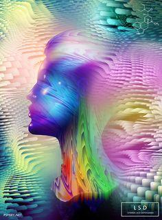 Dia 19 – LSD