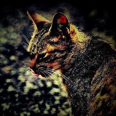 "@shoji_ogawa_unlimited's photo: ""#cat"""