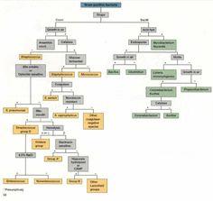 Bacteria identification flow chart gram positive bacteria flow 5b8d192a3c4b12cbb3dcb41986470082g 750710 pixels ccuart Choice Image