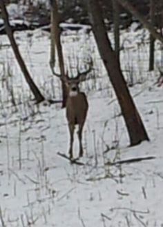 Friends deer farm buck