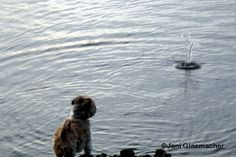 Hond, Djinten, AnimalPhotography, Zutphen a/d IJssel mei 2015