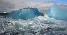 Pinguins-de-barbicha se reúnem em um iceberg em um arquipélago vulcânico raramente visitado, onde apenas as aves e focas encontram refúgio, na Ilha Candlemas, na Antártida