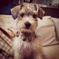 Oh my goodness. I think my dog needs that necklace...I mean dog collar.