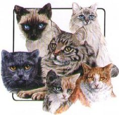 The Cat Group Image Graphic on Womans T Shirt