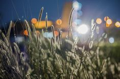 Close-up Photography of Grass Flowers  Free Stock Photo