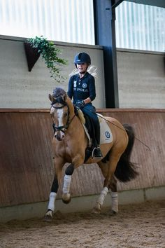 """""""Today I tried to canter Oaklyn, we did three strides each direction and stopped. I'm so proud of him.""""-Morgan"""