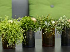 How to Grow and Care for Rhipsalis - See more at: http://worldofsucculents.com/how-to-grow-and-care-for-rhipsalis