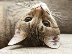 Help your cat look and feel meow-tastic with these at-home grooming tips!