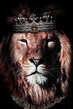 48216291 wild lion with flowers Animals Poster Print Lion King Art, Lion Of Judah, Lion Art, All Animals Photos, Animals And Pets, Cute Animals, Lions Photos, Lion Images, Lion Pictures