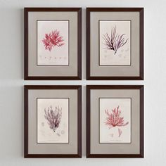 Purple corals http://www.roommy.ru/catalog/frames/purplecorals/