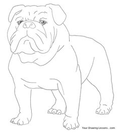 df951a3c6 How To Draw A Bulldog Bulldog Clipart, Animal Drawings, Drawings Of Dogs,  Pencil