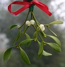 This History of Mistletoe, from the Ladies' Historical Tea Society. Steve has been shooting mistletoe down for me for several years & I bunch it up in clusters with red ribbons & give it to my family and friends. Merry Little Christmas, Noel Christmas, Country Christmas, Winter Christmas, All Things Christmas, Christmas History, Christmas Wedding, Holiday Crafts, Holiday Fun