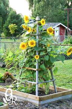 Front Yard Garden Design Delightfully Pretty Wooden Sunflower Pyramid - DIY Flower tower ideas are a great way to add some color, and the height really helps you maximize your space. Find the best designs! Mailbox Landscaping, Garden Landscaping, Landscaping Borders, Backyard Garden Ideas, Terrace Garden, Garden Beds, Garden Ideas Diy, Herb Garden, Indoor Garden