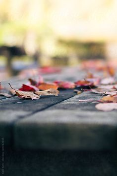 Red And Orange Fallen Autumn Leaves On Picnic Table by Kelli Kim