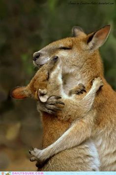Moments Tendres de Chats, Chiens et autres Animaux qui se font des Câlins – Ici… Tender Moments of Cats, Dogs and Other Cuddling Animals – Here, a Kangaroo and its cub Cute Baby Animals, Animals And Pets, Funny Animals, Animals Kissing, Mother And Baby Animals, Wild Animals, Strange Animals, Farm Animals, Animals Planet