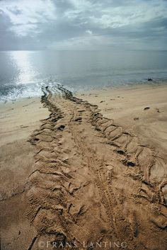 Terre Promise, Frans Lanting, African Life, Tire Tracks, Animal Tracks, Life Is A Journey, South America, Paths, Coast